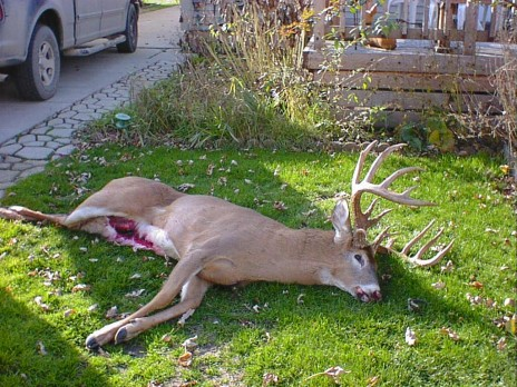 Dead Animal Removal Atlanta Affordable Dead Deer Removal